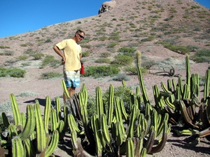 Bjarne and Cactus