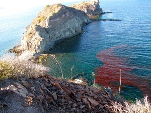 Red Tide at Isla Danzante