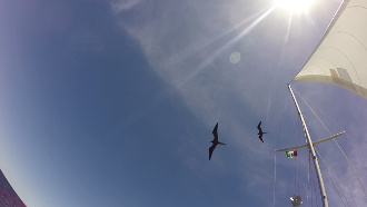 Two frigate birds soaring around Hoku Pa'a mast