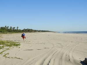 Barb walking beach at Isla de la Piedra Stone Island