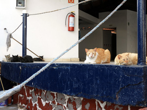 Cats lounging on deck at Club Nautico