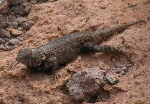 Lizard resting on rock